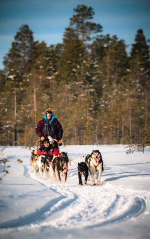 Excursion with huskies in Rovaniemi, Lapland
