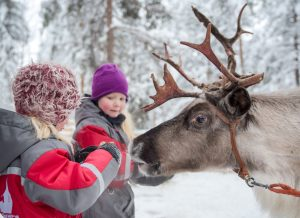 Feeding reindeer on Christmas House Safaris in Rovaniemi, Lapland